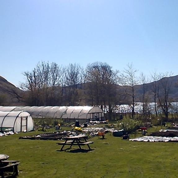 olytunnels at Knoydart Community Garden
